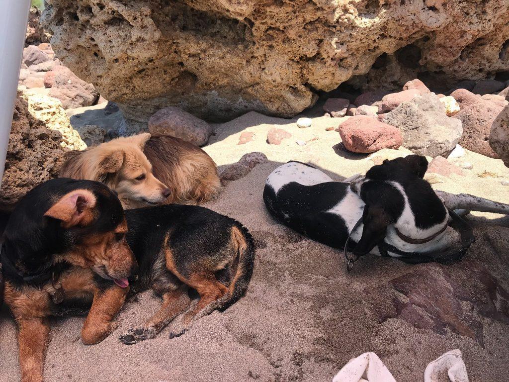 I can di Cera una Bolla in spiaggia